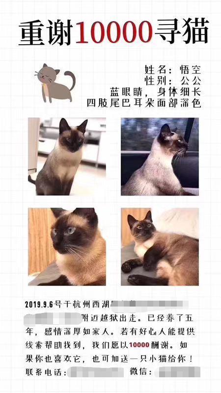 重酬万元寻猫的猫主人发声:万元赏金给了他人