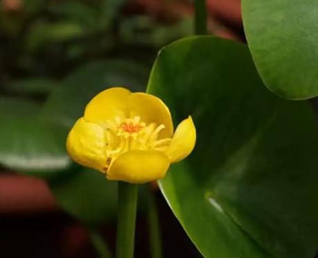 520,看植物园里的水生植物怎么表达爱