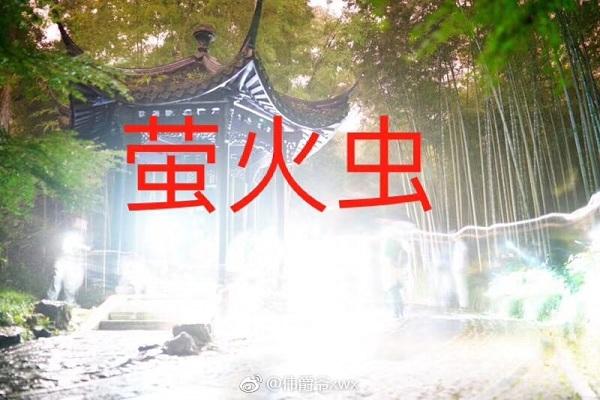 云栖流萤,萤火虫,萤火虫摄影,徐炜鑫,陆圳云
