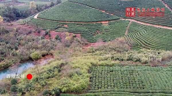 茶园,龙坞茶村,西湖龙井,杭州茶,上城埭村