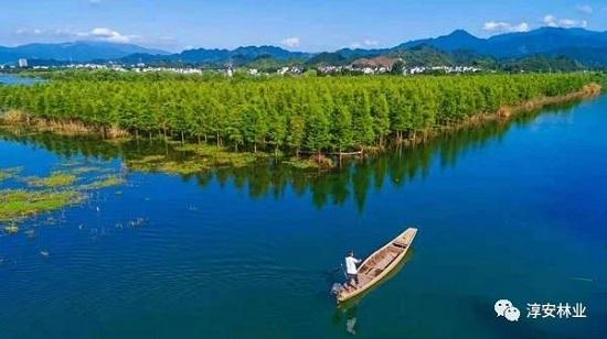岸森林生态园风景区
