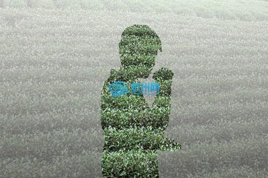 西湖龙井茶,龙井西湖,杭州龙井,龙井茶,茶园景观