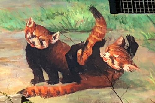 """杭州动物园小熊猫馆外场房子""""隐身""""了"""